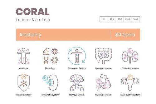 طرح لایه باز ست آیکون آناتومی و پزشکی 80 Anatomy & Medical Profession Line Icons